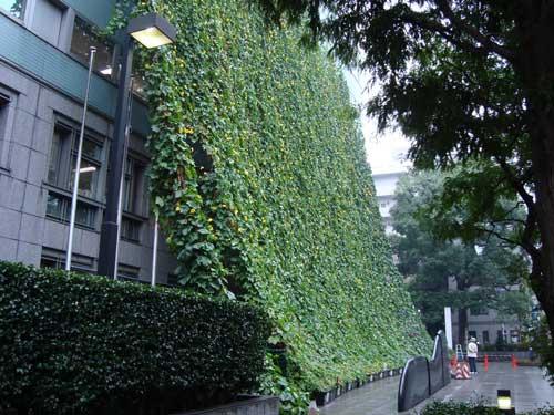 Suginami assembly green curtain