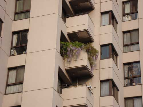 Apartment wisteria, Harajuku balcony