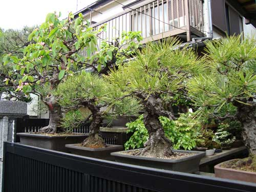 Bonsai collection on residence wall