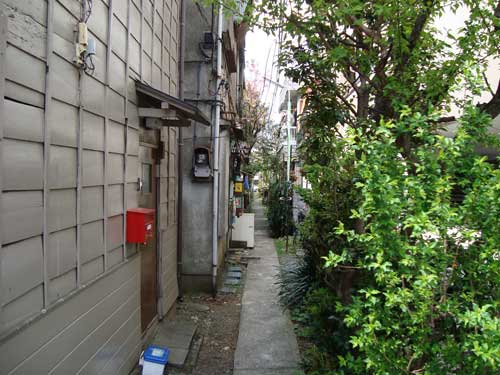 Narrow green alley, Honcho, Nakano