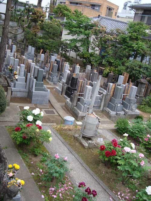 Shiroganedai cemetery peonies