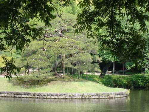 Koishikawa Korakuen Lone Pine