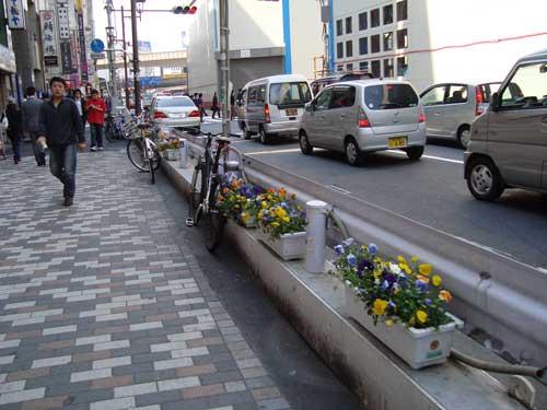 Pansies on Shibuya sidewalk