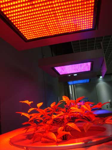 Pasona o2, LED lights