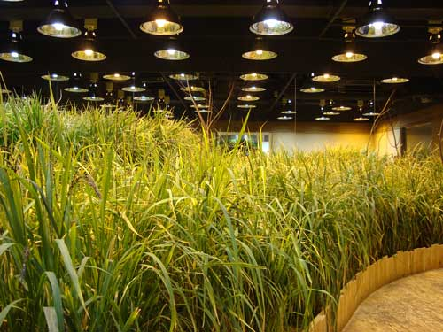 Pasona o2, rice field