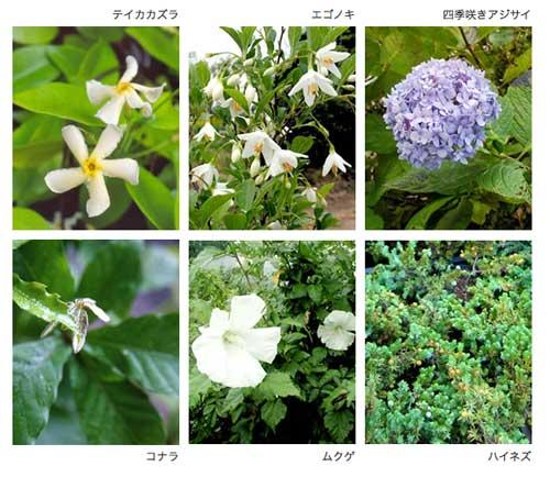 Gobai Midori Plant Palette