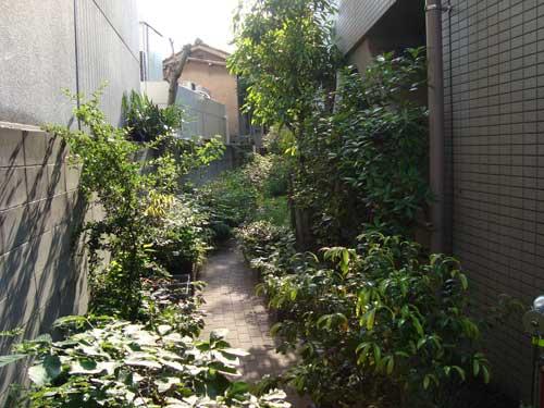 Tase Michio's front walkway in Tokyo