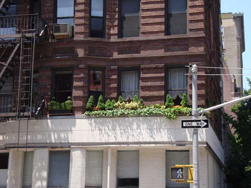 New York City window garden