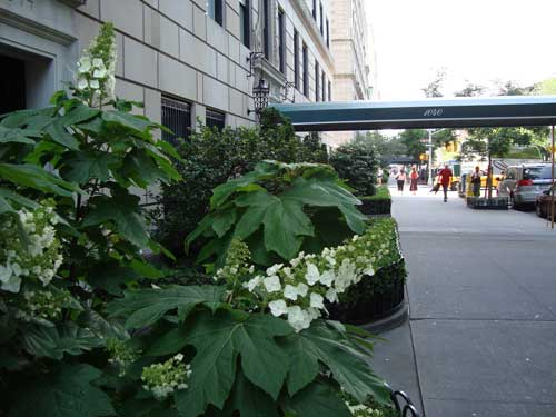 A plant outside 1040 5th Avenue