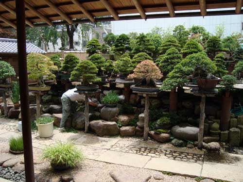 Bonsai Museum tree hospital, with sensei's father