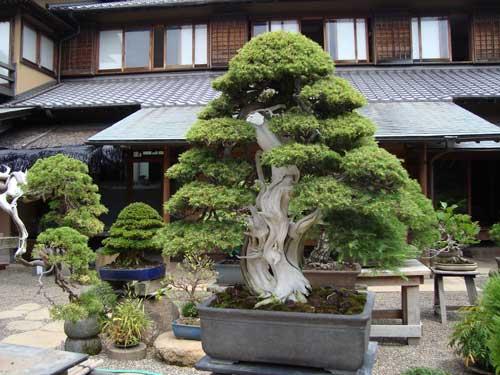Kobayashi Kunio's Bonsai Museum in Edogawa-ku