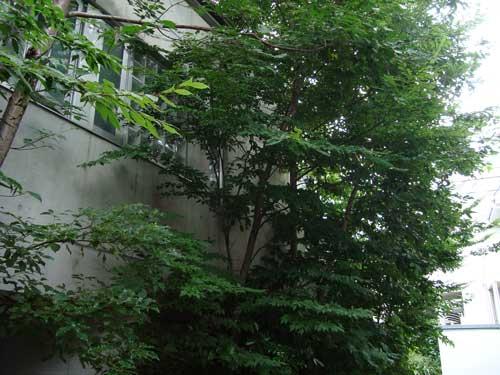 Kami Meguro residence B tall trees