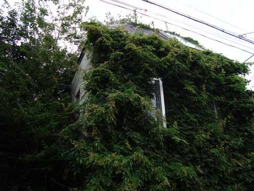 Kami Meguro residence B wisteria in July 2009