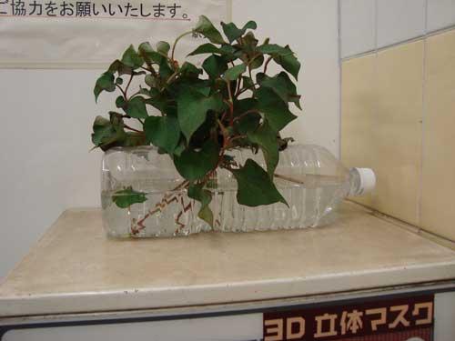 Plant in Tokyo Metro Iriya station