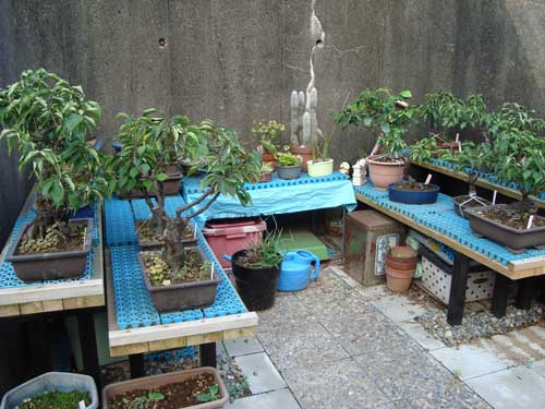 Riverbank community garden in Tsukijishima