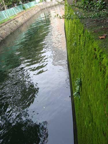 Tsukudajima moss canal