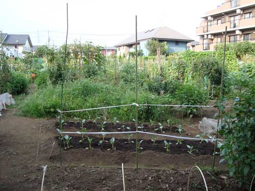 Community vegetable garden in Shimo Takaido