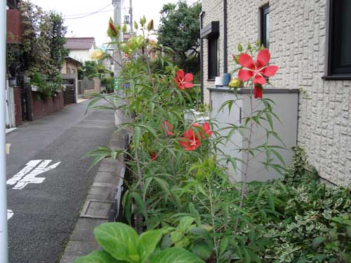 Jyugaoka unknown summer flower