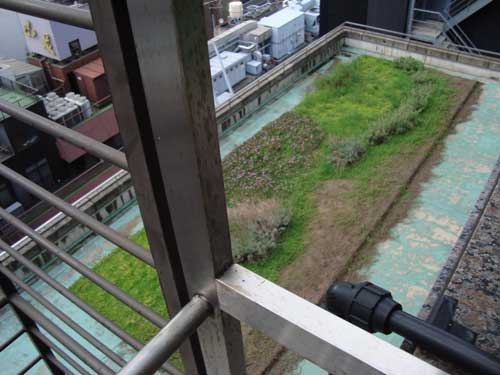 Ginza Honey Bee Project green roof