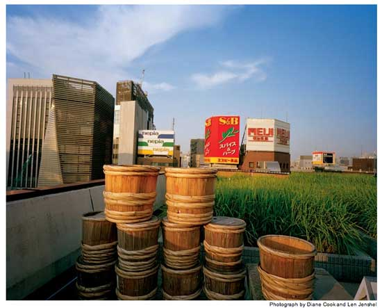 Hakutsuru Sake rooftop rice field in Ginza
