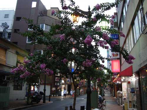 Shinjuku nichome flowering tree in summer