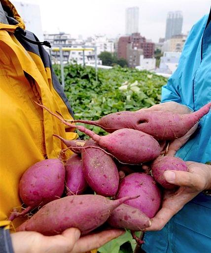 NTT Facilities Green Potato