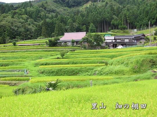 Satoyama and biodiversity