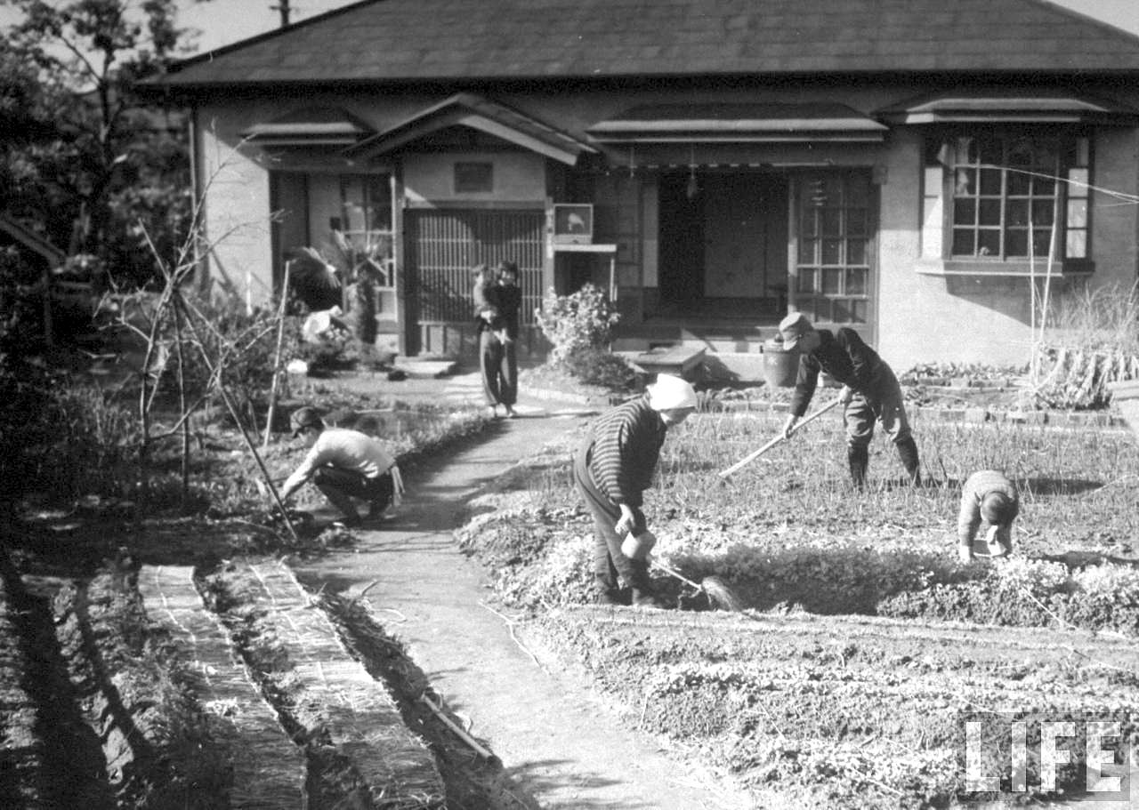 Image Of Tokyo Residential Vegetable Garden In 1944