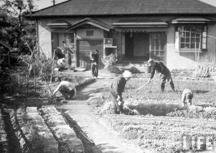 Tokyo residential vegetable garden in 1944