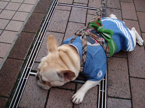 Omatsuri in Tsukishima, dog