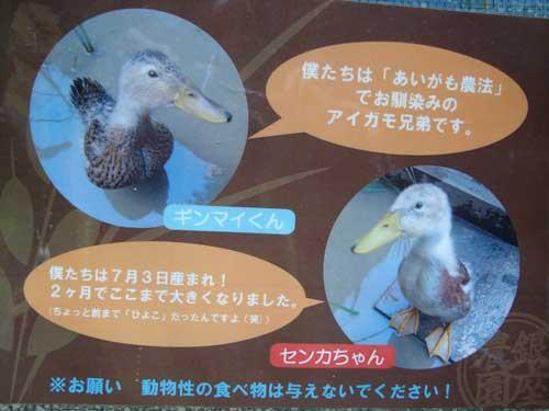 Ginza Farm ducks explain aigamo nouhou farming