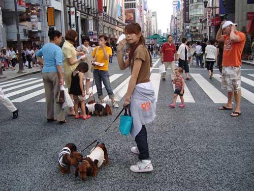 Ginza pedestrian heaven