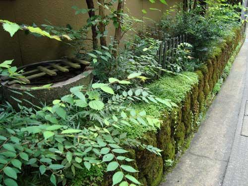 Niigata moss wall