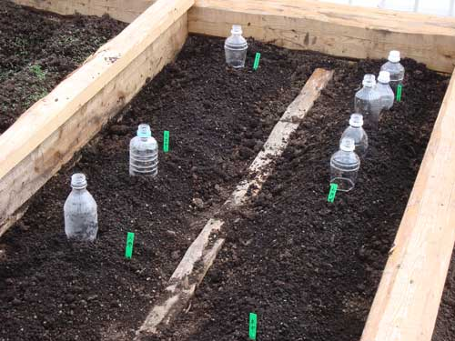 Omotesando Farm seedlings