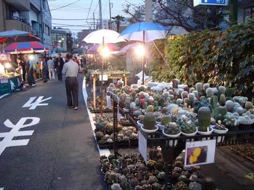 Plants at Kawagoe festival