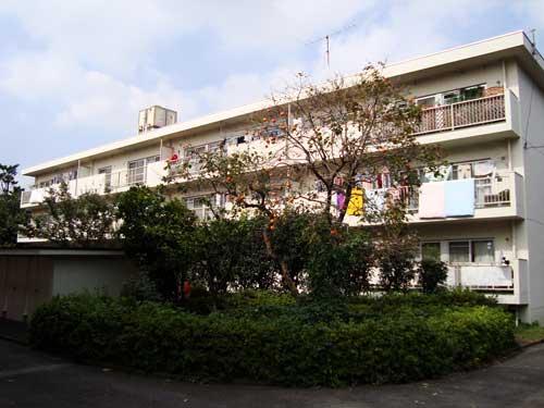 Persimmons in Tokyo