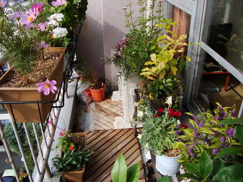 Balcony garden in early November