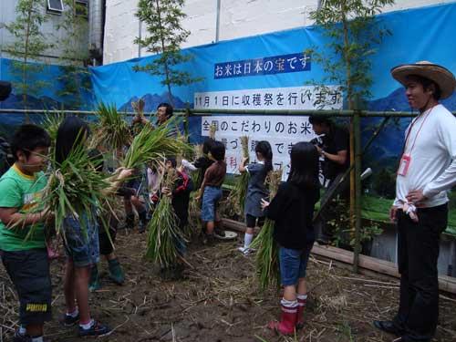 Iimura and Ginza Farm Rice Harvest