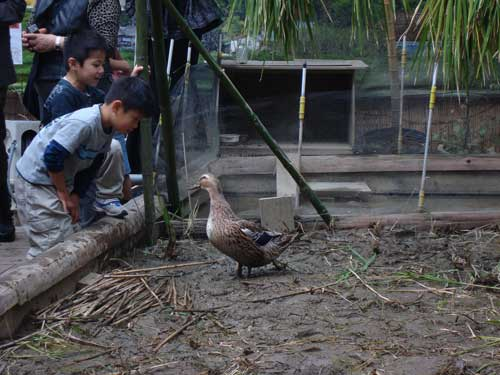 Kids and duck at Ginza Farm