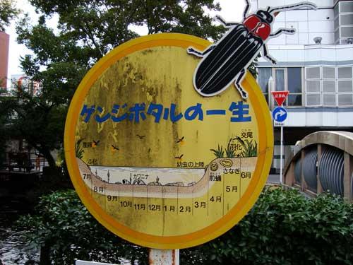 Firefly habitat in Okayama