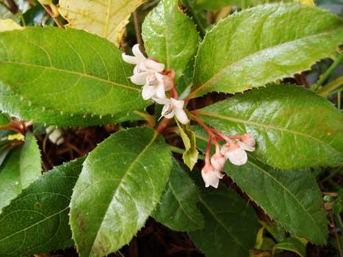 Blossom on satoyama unit from 5bai midori
