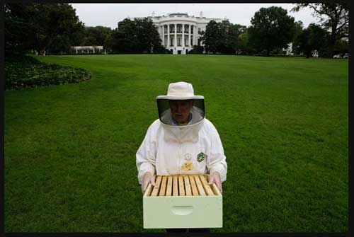 White House bee hive