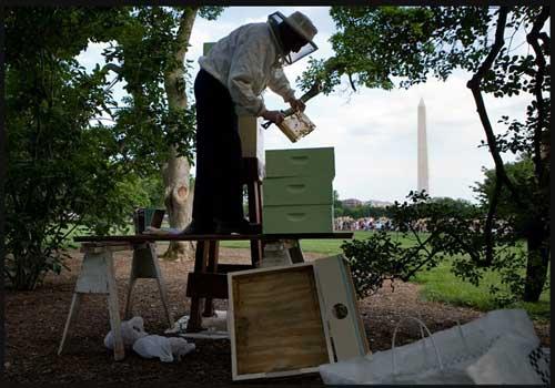 White House bee hive