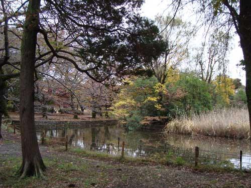 Zenpukuji park fall foliage