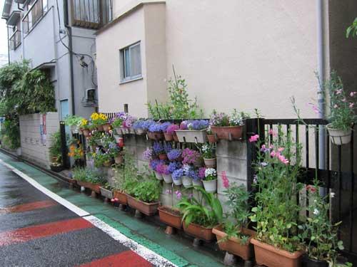 Harajuku Flower Pot Wall Are More Grandma Than Hipster
