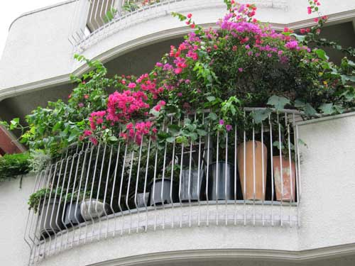 Balcony overflows with bougainvillea and other plants for Best flowers for apartment balcony
