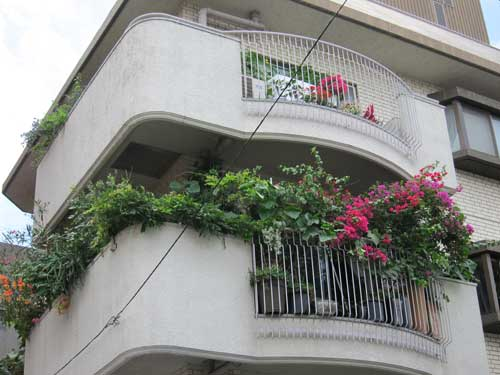 Balcony overflows with bougainvillea and other plants for Definition of a balcony
