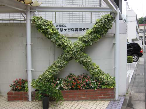 Ivy trained into an X-shape topiary
