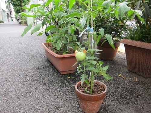 koenji_sidewalk_tomato