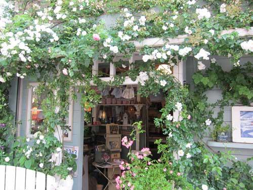 nishiogikubo_flower2_shop